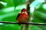 Bild von NORTH SULAWESI BIRD WATCHING