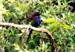 Bild von TANGKOKO BIRD WATCHING 4 days 3 nights