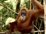 Bild von 13 DAYS / 12 NIGHTS BUKIT LAWANG - SUMATERA OVERLAND TOUR PLUS