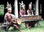 Bild von DAYAK FEAST & ORCHID TOUR 6 Days / 5 Nights